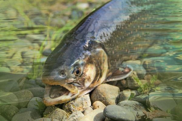 Adventskalender 2021 für Fliegenfischer,
